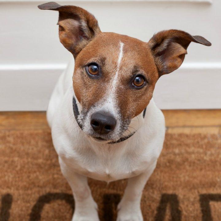 7 Common Dog Haircuts Qc Pet Studies