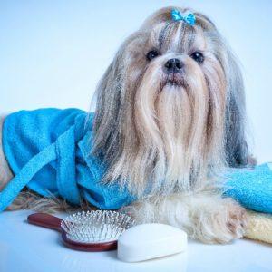 Groomed Pet - Professional Pet Grooming Industry