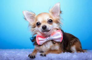 Cute dog accessory - dog bow tie