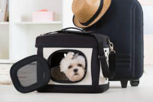 Dog travel bag or pet carrier