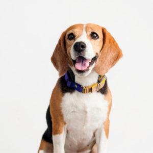 pet photography dog grooming photos