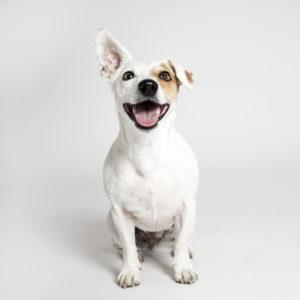 dog portrait for dog grooming portfolio