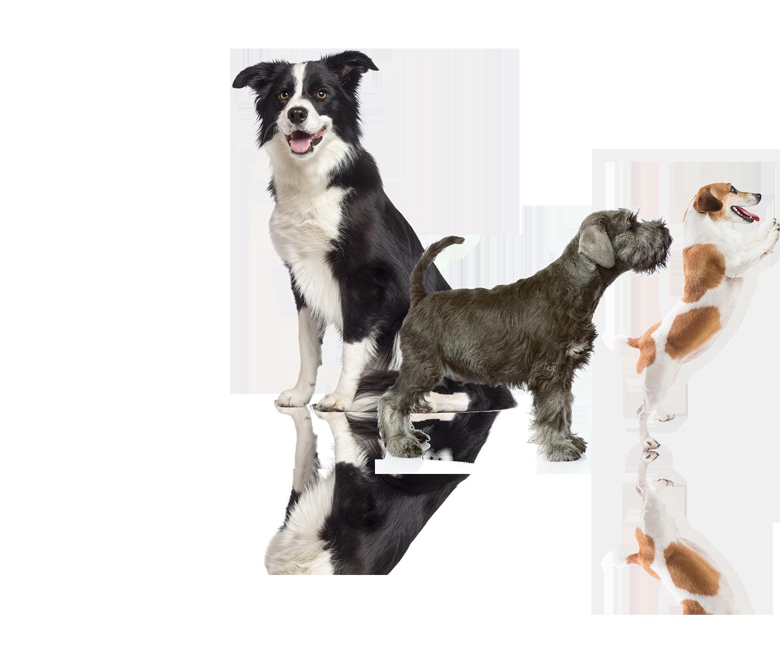 Become A Professional Dog Groomer Qc Pet Studies