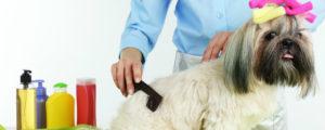 pet grooming academy