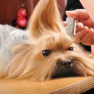 dog grooming gadgets