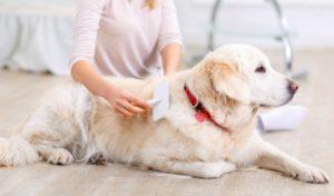 Women becoming a dog groomer online