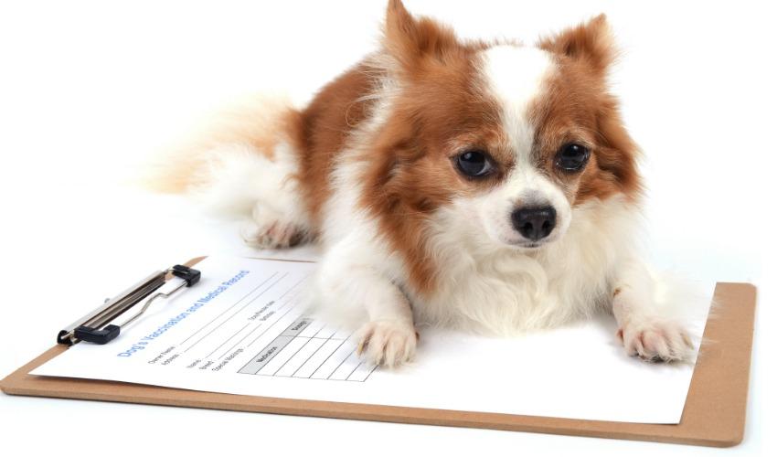 online dog grooming school
