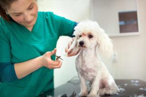 online dog grooming certification