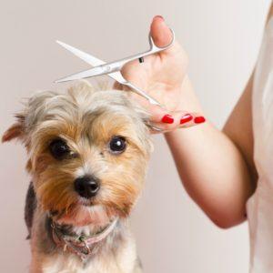 dog grooming salary