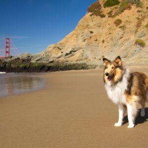 dog groomer in California