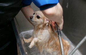 QC Pet Studies
