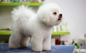 Running a dog grooming salon