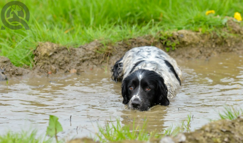 dog groomer certificate