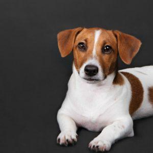 dog grooming myths