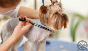 dog groomer certification