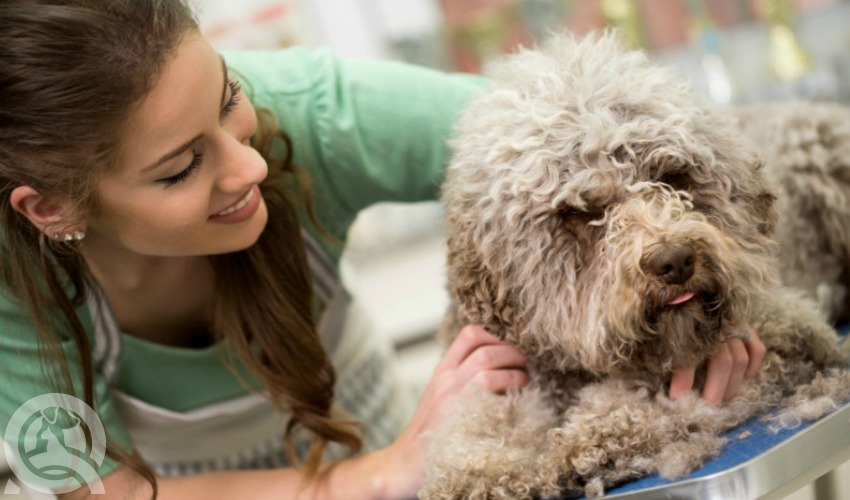 how to become a dog groomer ontario