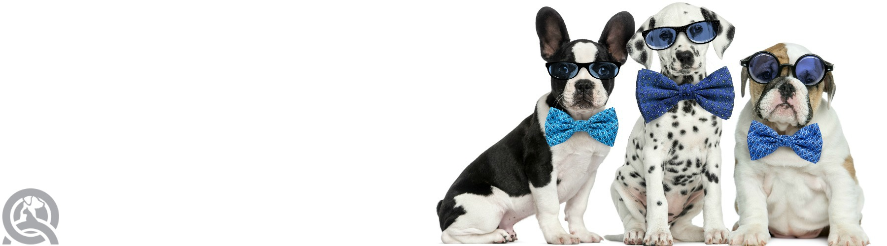Certified Dog Grooming Course