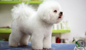 become a dog groomer
