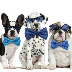 certified dog groomers
