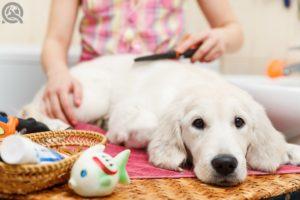 Certified dog groomer earning salary in pet salon