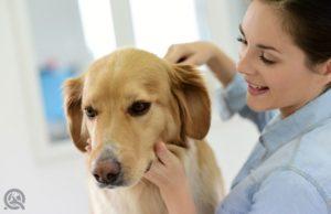 Running a pet salon as a certified dog groomer