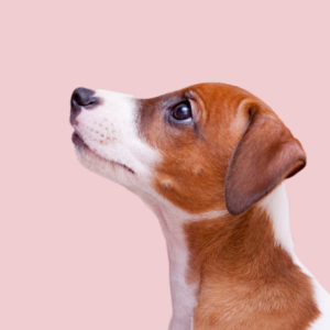 professional dog grooming association