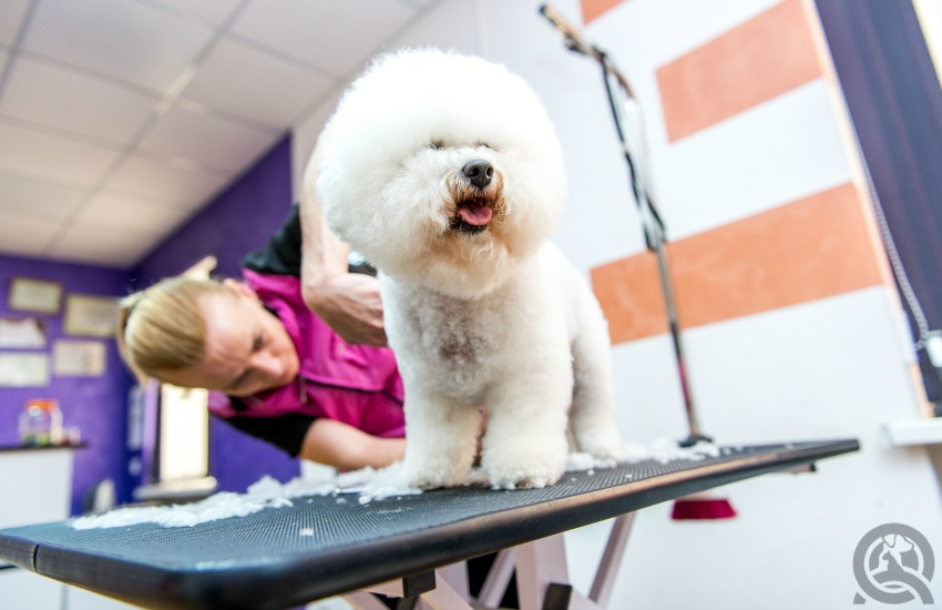 Pet Groomer Job - QC Pet Studies