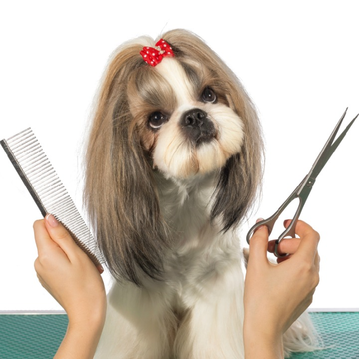 dog grooming class