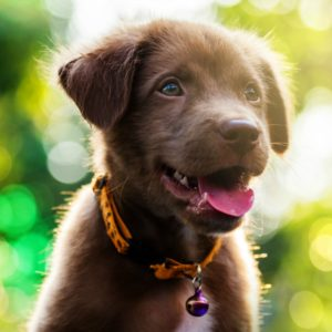 dog grooming insurance