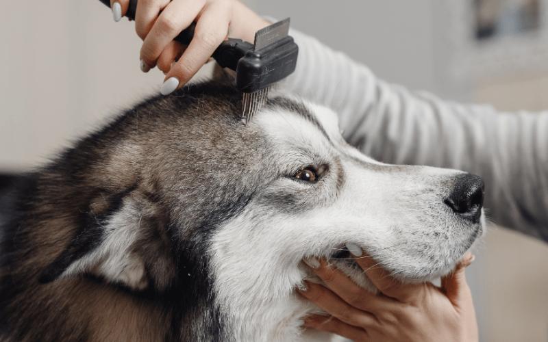 dog groomer insurance