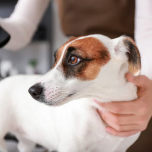 dog groomer at a dog grooming salon grooming a dog