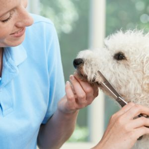 certified dog groomer