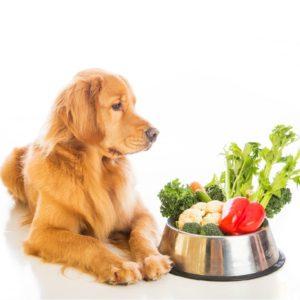 pet vegetarian diet