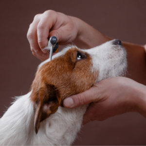 pet grooming career