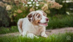 happy dog sitting outside smiling
