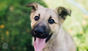 qc pet studies dog happy after dog grooming job