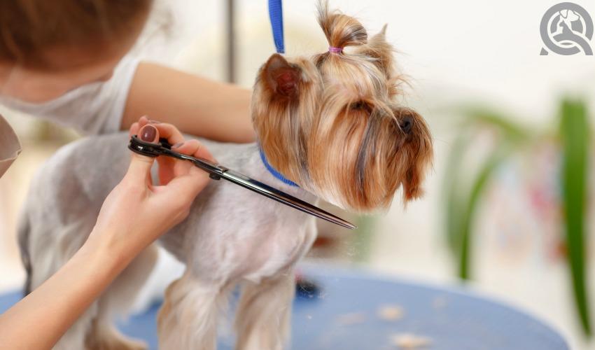pet grooming practice