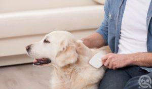 groom your dog
