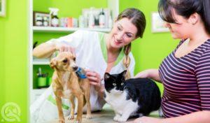 dog grooming apprenticeship