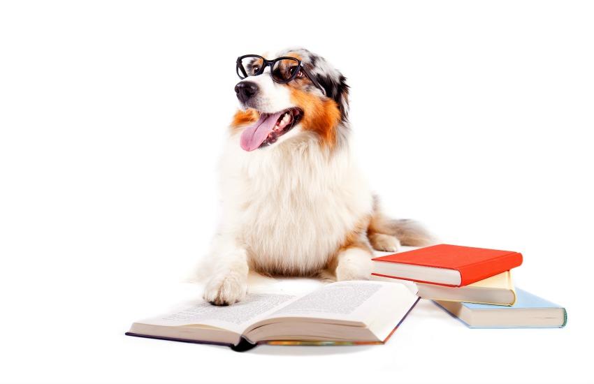 Dog studying breed groups