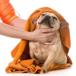 dog groomer drying dog after bath