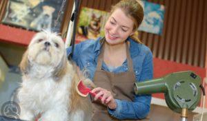 professional dog groomer drying dog
