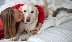 Valentine's Day dog cuddles