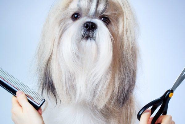 QC pet studies favorite dog grooming assignments