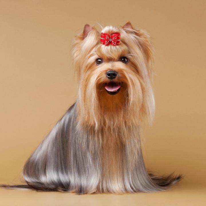 The 6 Worst Dog Grooming Trends Qc Pet Studies