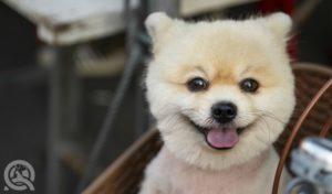 Circle head dog grooming trend