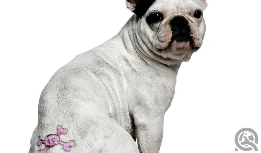 Tattoo dog grooming trend