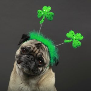 St. Patrick's Day Dog Treats