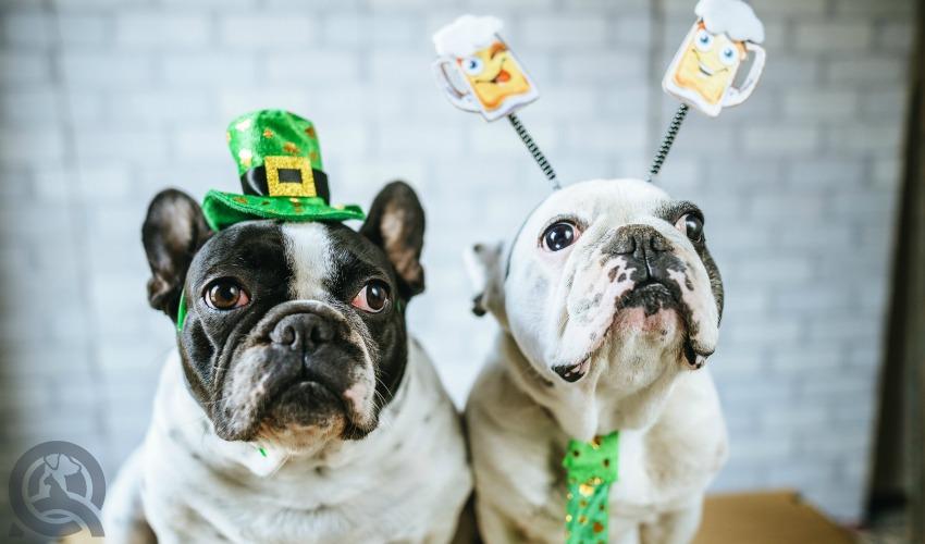 St. Patrick's Day Dogs
