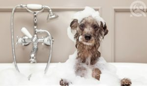 bathing a dog in a bubble bath